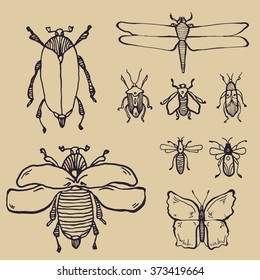 collection of hand drawn insects
