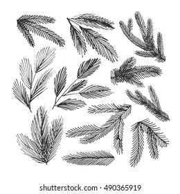 Collection of hand drawn spruce branches. Ink illustration. Vector christmas branches. Isolated on white background.