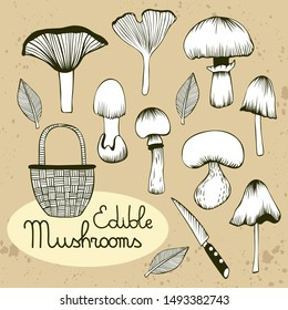 Collection of hand drawn vector mushrooms. Chanterelle, wood blewit, inky cap, gypsy mushroom, red pine mushroom, basket, knife and leaves. Beige textured background