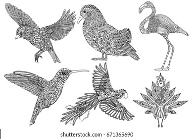 collection handdrawn birds coloring page 260nw