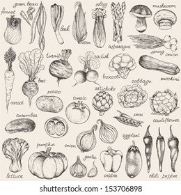 Collection of hand-drawn vegetables, vector illustration in vintage style.