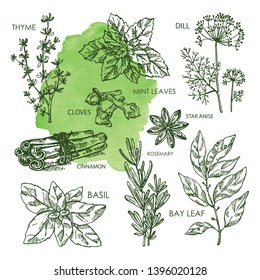 Collection of hearbs and spises; bay leaf, basil, thyme, rosemary, mint, cloves, dill, stas anise, cinnamon. Vector hand drawn illustration