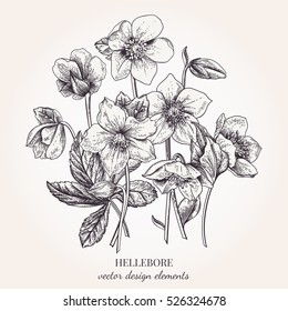 Collection of hellebore flowers. Vector floral design elements. Botanical illustration. Vintage style. Black and white.