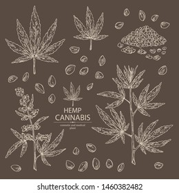 Collection of hemp: cannabis seeds and plant. Superfood. Cosmetic and medical plant. Vector hand drawn illustration