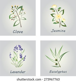 Collection of Herbs . Labels for Essential Oils and Natural Supplements. Lavender, Eucalyptus, Jasmine, Clove