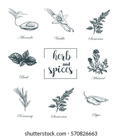 Collection of herbs and spices skech vector. Set medicinal herbs