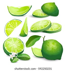 Collection with high detailed color citrus. Vector illustration with sliced limes
