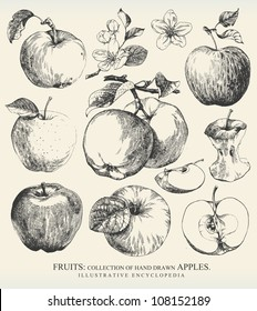 Collection of highly detailed hand drawn apples.