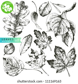 Collection of highly detailed hand drawn leaves isolated on white background