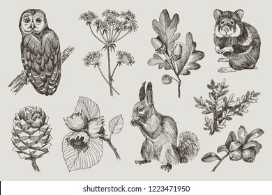 Collection of highly detailed hand drawn owl, hamster, squirrel, acorns, fir branch, berries, pine cone, hazelnut isolated on background. Vector design