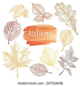 Collection of highly detailed hand drawn leaves isolated on white background. Watercolor blot. Autumn background.