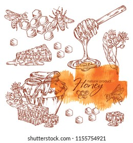 Collection of honey, jar of honey,linden flower and honeycomb with a bee. Vector hand drawn illustration.