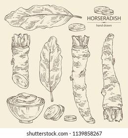 Collection of horseradish: horseradish root, leaves and a piece of horseradish root. Vector hand drawn illustration.