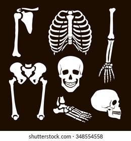 Collection Human Skeleton  Vector  illustration white set