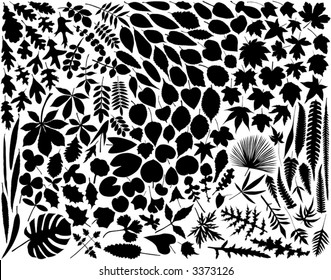 Collection of hundreds of vector leaf outlines