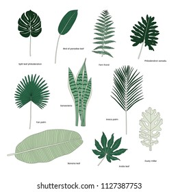 Collection of illustrated tropical leaves