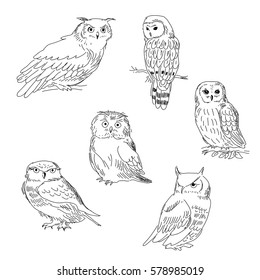 Collection of images of a owls painted in a realistic style