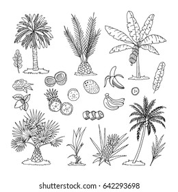 A collection of images of a vector format of a palm tree. Line and silhouette of palm trees isolated on white background. Doodle set