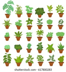 A collection of indoor plants. large set of houseplants in pots. vector illustration.