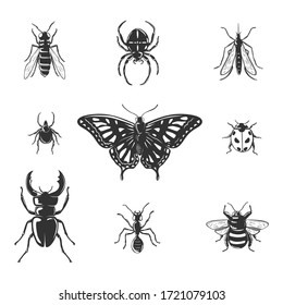 Collection of insects isolated on white.Vector illustration.
