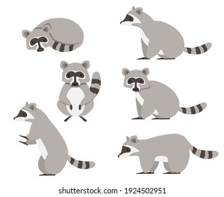 Collection isolated cute raccoon. Animal character design. Flat vector illustration isolated on white background.
