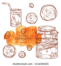 Collection of kombucha: mushroom, jar with kombucha tea. Super food. Vector hand drawn illustration
