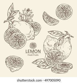 Collection of lemon, lemon slice and flower . hand drawn