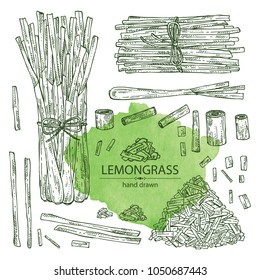 Collection of lemongrass: bunch, plant and dry lemongrass. Vector hand drawn illustration.