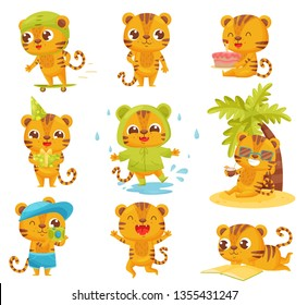 Collection of little tigers on white background.