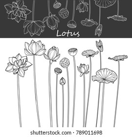 Collection lotus flower with line-art on white backgrounds. Vector hand drawn illustration.