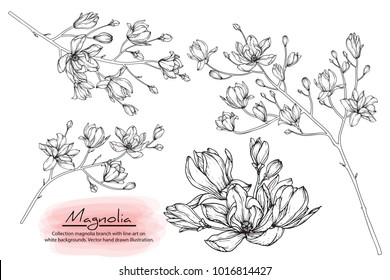 Collection magnolia branches with line-art on white backgrounds. Vector hand drawings  illustration.