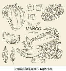 Collection of mango fruit,  leaves and mango slice. Vector hand drawn set illustration