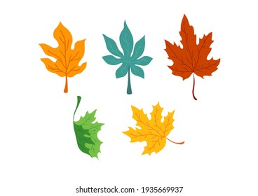 Collection of maple and oak leaves, fall season background. Vector illustration.