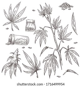Collection of marijuana plant with stem and leaves. Isolated set of containers with pills, alternative medicine with organic biological element. Monochrome sketch outline, vector in flat style