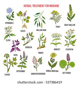 Collection of medicinal herbs for migraines relief. Hand drawn botanical vector illustration