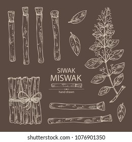 Collection of miswak, siwak: natural toothbrush, plant, branch and leaves. Vector hand drawn illustration.