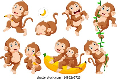 Collection of monkey in different poses