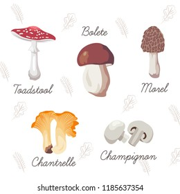 Collection of mushrooms and leaves. Vector isolated illustrations. Toadstool, bolete, morel, chanterelle, champignon.