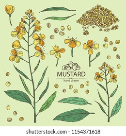 Collection of mustard: plant, mustard seeds, flower, leaves and pod. Dijon mustard. Vector hand drawn illustration.