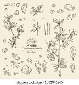 Collection of myrrh: plant and resin of myrrh. Commiphora myrrha. Perfumery, cosmetics and medical plant. Vector hand drawn illustration