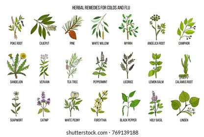 Collection of natural herbs for colds and flu. Hand drawn botanical vector set of medicinal plants