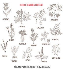 Collection of natural herbs for gout. Hand drawn botanical vector illustration