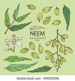 Collection of neem, leaves and selling. Cosmetics and medical plant. hand drawn
