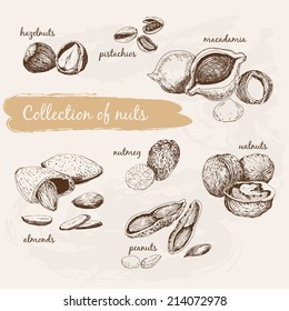 Collection of nuts. Hand drawn graphic illustrations