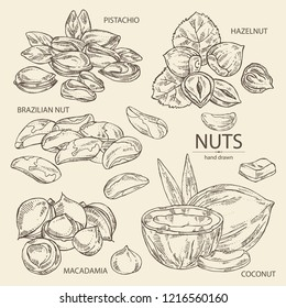 Collection of nuts: pistachio, macadamia, hazelnut, brazilian nut and coconut. Vector hand drawn illustration.