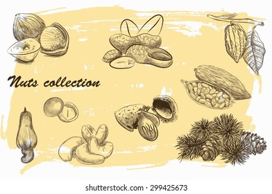 collection of nuts sketch with vintage background