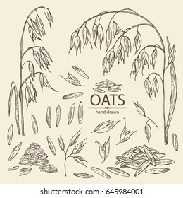 Collection of oats: grain and oats plant. Vector hand drawn illustration