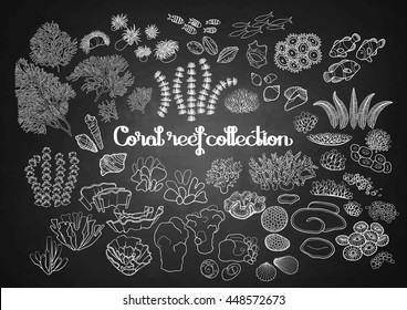 Collection of ocean plants and coral reef elements drawn in line art style isolated on chalkboard. Sea mood. Coloring book page design for adults and kids.