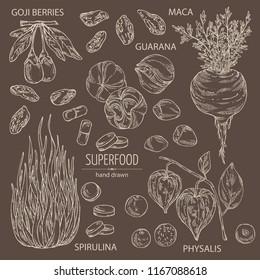 Collection ofsuper food: guarana, spirulina algae, maca peruvian, goji berries and  physalis. Super food. Vector hand drawn illustration.