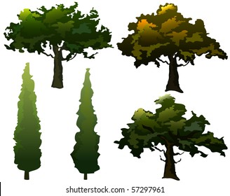 Collection of olive trees and cypress. Seasonal colors. Vector.